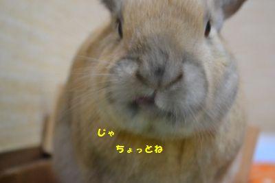 018_20140111113554ebf.jpg
