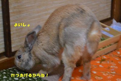 056_20140111113604e7d.jpg