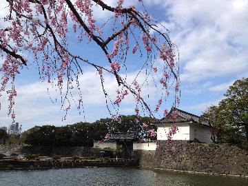 3月26日皇居2(1)