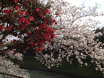 03月26日皇居09(1)