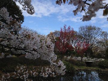 国会前庭園10(1)