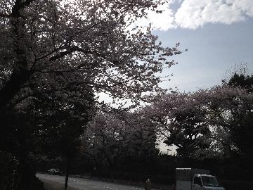 3月28日神宮外苑