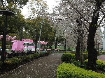 3月31日檜町公園3(1)