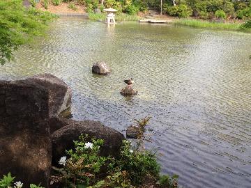 4月17日檜町公園2(1)