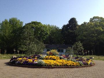 代々木公園の花壇