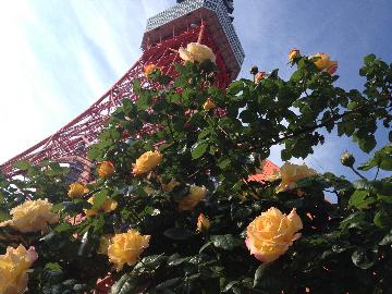 5月4日東京タワー6(1)