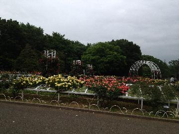 5月11日代々木公園