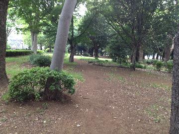 5月11日代々木公園5(1)