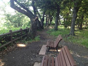5月17日北の丸公園3(1)