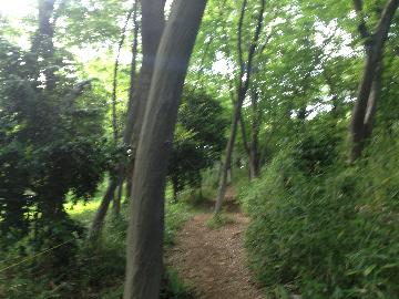 代々木公園外周09(1)