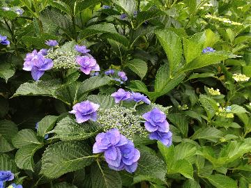 サッポロ前の花壇