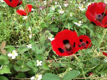 サッポロ前の花壇03(1)