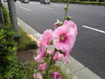 6月3日赤坂御所