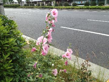 6月3日赤坂御所02(1)