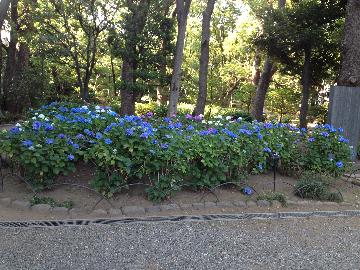06月9日高橋是清記念公園(1)