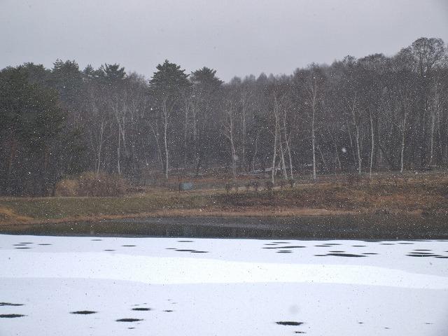 20131212まるやち湖凍る (5)
