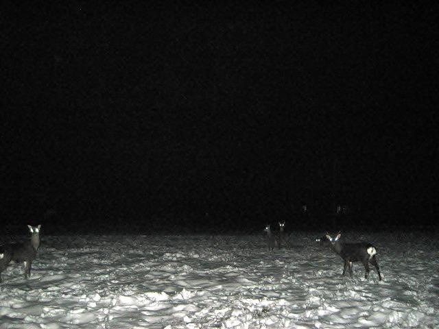 20140112悠心荘前で鹿 (2)