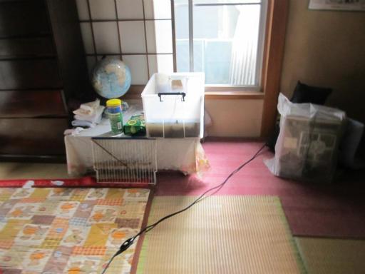 20130505・亀仙人05