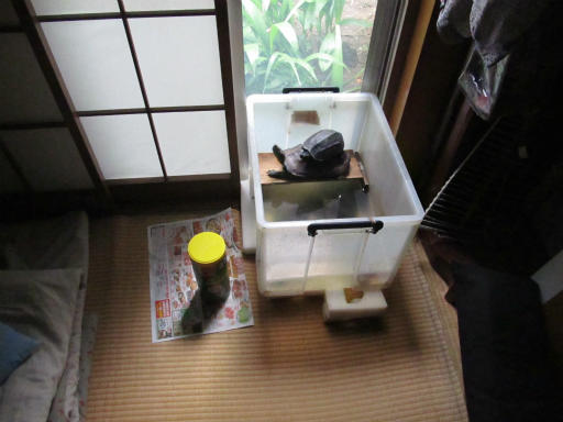 20130609・カメさん刑事3-01