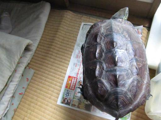 20130609・カメさん刑事1-03