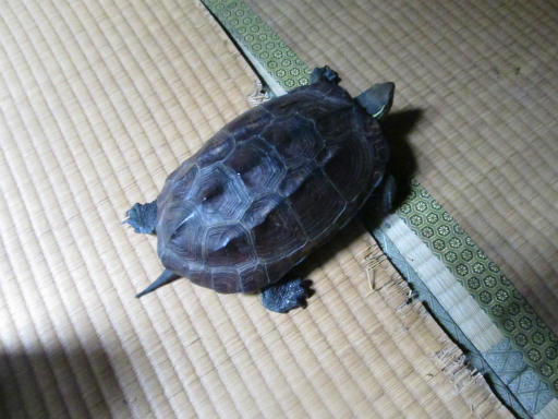20130609・カメさん刑事1-01