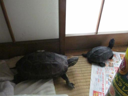 20130609・カメさん刑事1-15