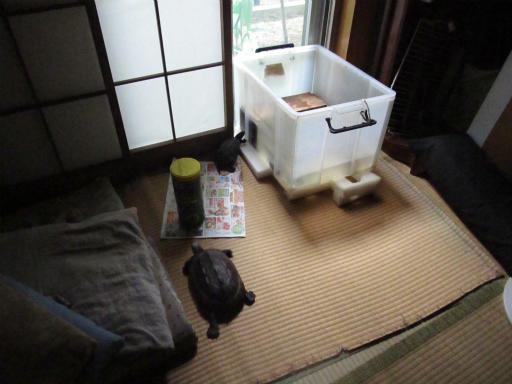 20130609・カメさん刑事1-20