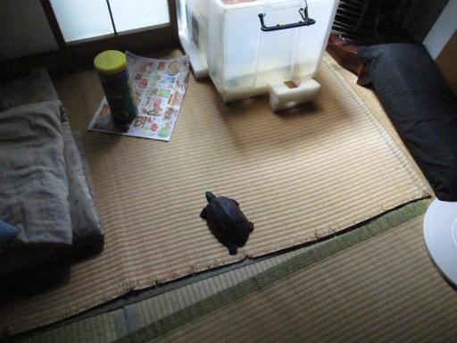 20130609・カメさん刑事2-12