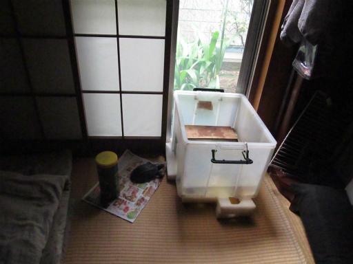 20130609・カメさん刑事2-14