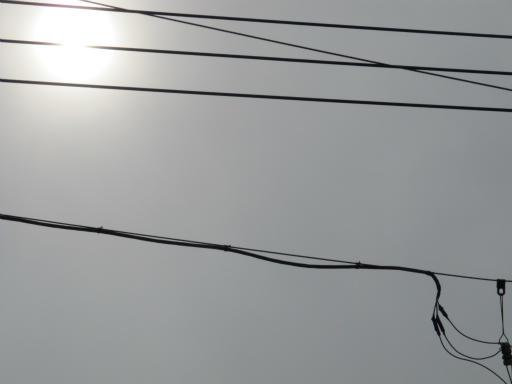 20130824・オナガとカメのいる空09
