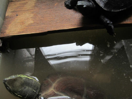 20130824・オナガとカメのいる空15