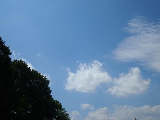 20130901・緑森空01中(モルモットとアヒルのいる空)
