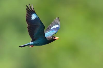 28 天竜川を優雅に飛翔