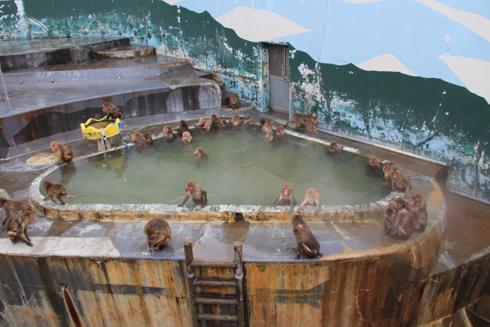 函館市熱帯博物園-8