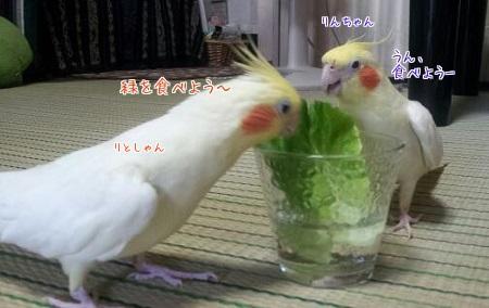 お野菜食べよ!