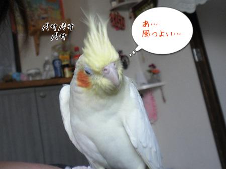 風つっよ~