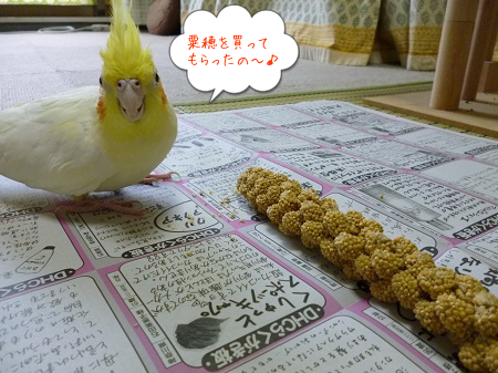 粟穂大好き~
