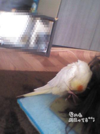 くっつき鳥(笑)
