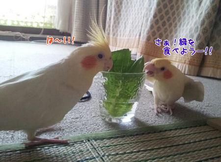 野菜食べようー
