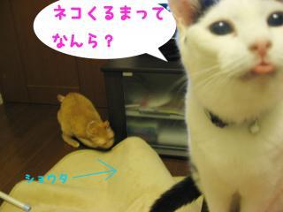 IMG_0928.jpg