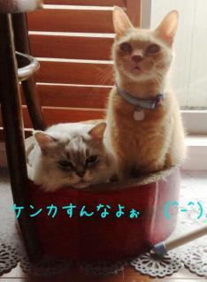 image_20130613235412.jpg