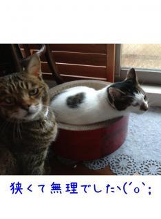 image_20130614231431.jpg