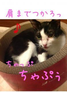image_20130625232216.jpg