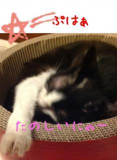 image_20130625233049.jpg