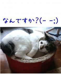 image_20130707235107.jpg