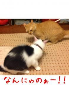 image_20130710233820.jpg