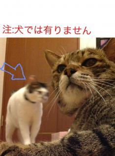 image_20130727005612.jpg