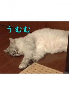 image_20130804234506425.jpg