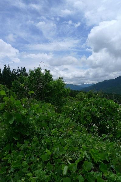 130622-ジャングル