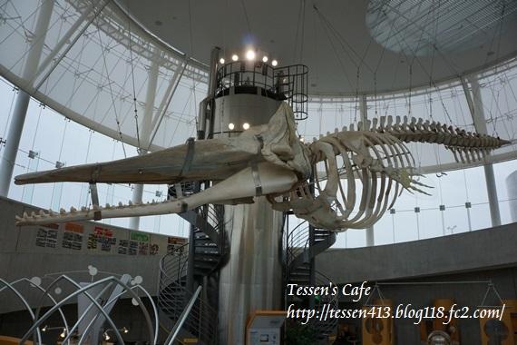 021 - マッコウクジラ